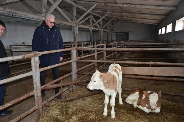 Московский инвестор заинтересовался Астраханскими молочными заводами