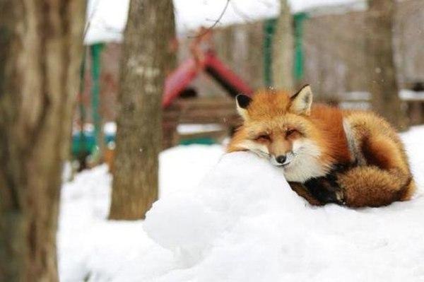 В Волгоградской области начали подсчет животных