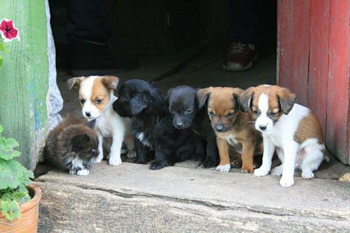 В Геленджике появится приют для бездомных животных