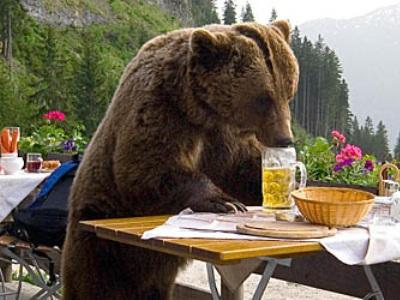 Фонд Брижит Бардо будет спасать сочинских медведей-алкоголиков