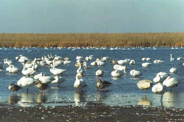 Маловодность Каспийского моря угрожает пожарной безопасности Астраханского заповедника