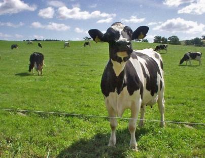 В Ростовской области массово вакцинируют сельскохозяйственный скот