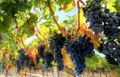 Заменить импортное вино отечественным - главная тема круглого стола на выставке