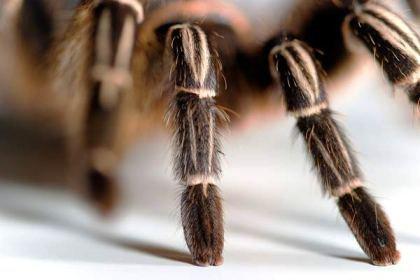В Сочи обнаружили неизвестных науке пауков
