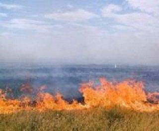 Ущерб от пожара в Астраханском заповеднике оценён в 100 миллионов рублей