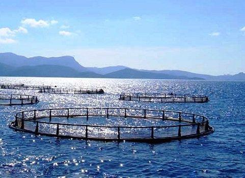 В Краснодарском крае собираются заняться развитием аквакультуры