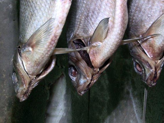 В Ростовской области разоблачили подпольный рыбный цех