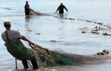 В Астраханской области гибнет рыба
