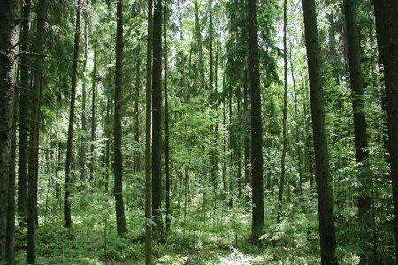 Жителям Ростовской области ограничат доступ в леса