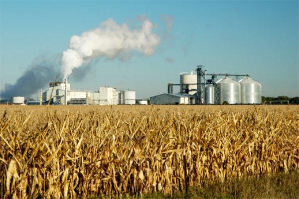 В Ростовской области будут перерабатывать зерно