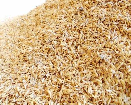 В Краснодарском крае электроэнергию будут получать из рисовой лузги