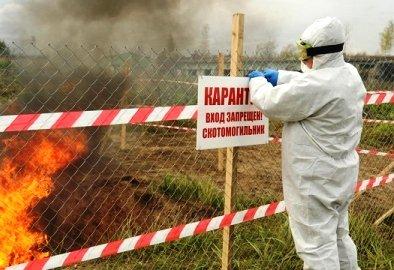 Африканская чума гуляет по Волгоградской области
