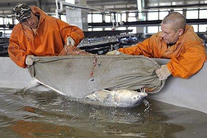 Рыборазводный комплекс появится в Адыгее