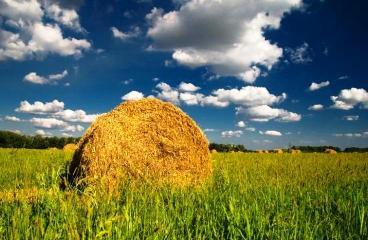 В Астраханской области катастрофический недостаток грубых кормов