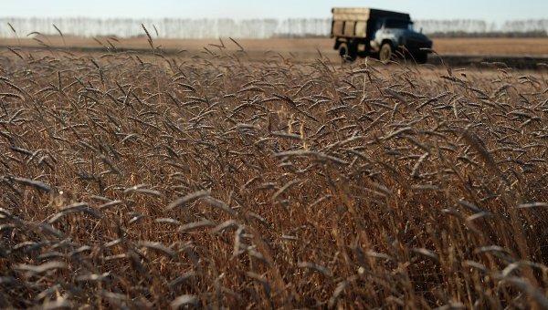 В Адыгее и Краснодарском крае завершают сбор озимых с рекордной урожайностью
