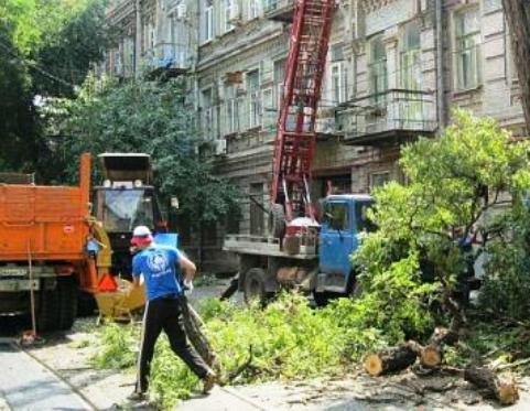 Благоустройство ростовских улиц ведется за счет уничтожения зеленых газонов и сруба деревьев