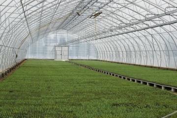 Волгоградская область поддержит селекционные хозяйства