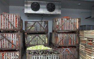 В Калининградской области производят консервы в ненадлежащих условиях
