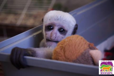 В Ростовском зоопарке в этом году резко увеличилась посещаемость