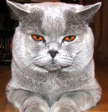 В ГУ МВД по Ростовской области в качестве консультанта работает кот