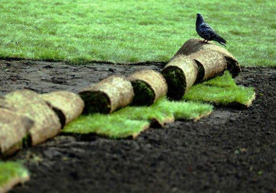 В Краснодаре представили новую разработку - вырабатывющий электроэнергию газон