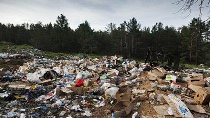 В Ростове «Зелёный остров» после вмешательства прокуратуры очистили от мусора