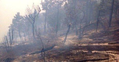 Крупные пожары бушуют в лесах и полях Адыгеи