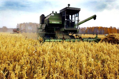Кубань заняла второе место в стране по агрострахованию