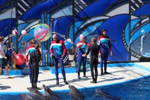 Экологи требуют проверить условия проживания дельфинов в сочинской