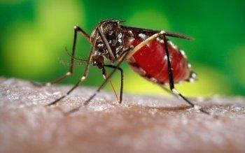Ростовские медики предупреждают о лихорадке Зика, которой можно заразиться на отдыхе в экзотических странах