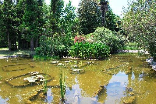 Сочинский парк