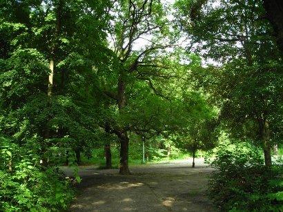 В Краснодаре пройдут общественные слушания по расширению границ природного памятника - Первомайской рощи