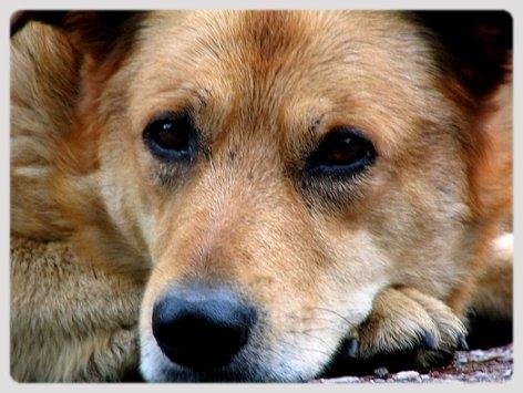 В Краснодаре убивают собак на глазах у сотен горожан