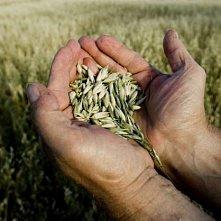В Краснодарском крае обсудили меры государственной поддержки сельского хозяйства