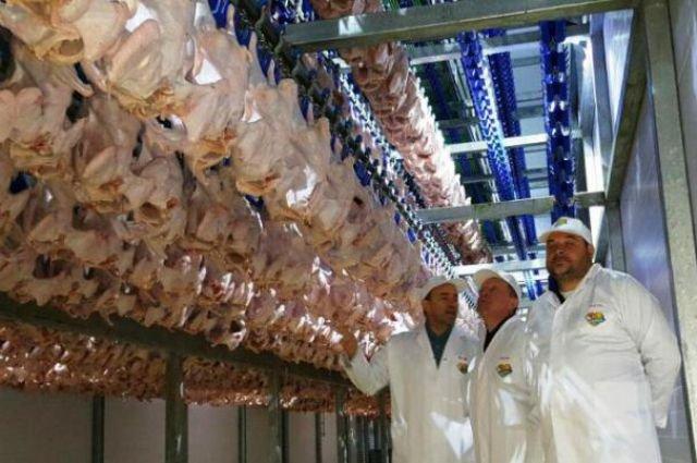 В Ростове-на-Дону откроются пятьдесят новых магазинов по продаже мяса индейки и утки