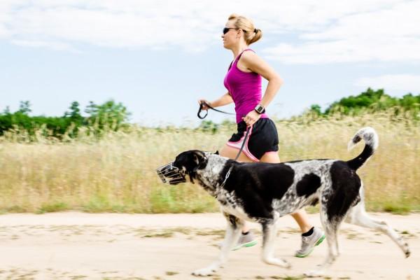 Каким спортом заняться с собакой?