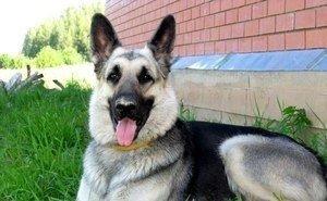 Астраханцы предлагают 19 августа сделать Днем собак