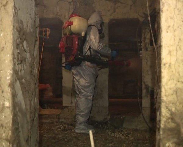 Меры профилактики лихорадки Зика обсудили в Сочи