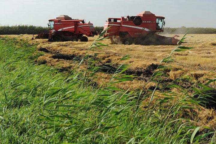 Рисовые поля в Темрюкском районе переданы ГУП «Кубанские продукты»