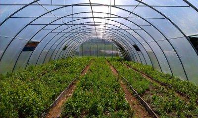 В Адыгее появится новый тепличный комплекс стоимостью в 2,4 миллиарда рублей
