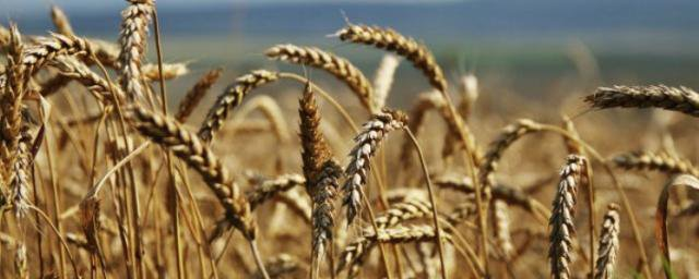 В Ростовской области планируют увеличивать объёмы переработки местного сельхозсырья