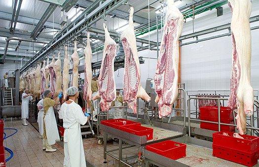 Самый крупный мясоперерабатывающий комплекс появится в Калмыкии