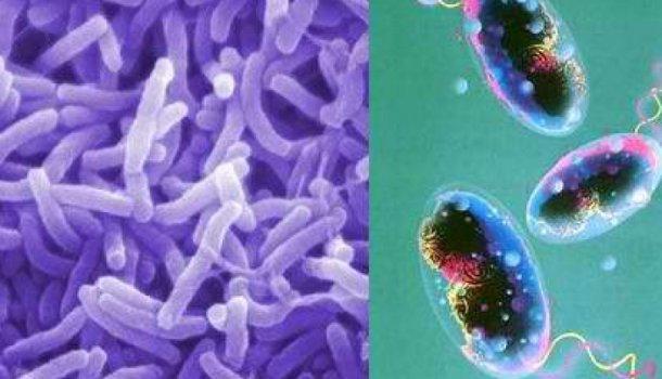 В Волгоградской области озаботились проблемой холеры