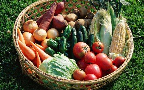 Потери урожая томатов в Ростовской области компенсируются хорошими сборами картофеля