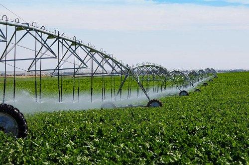 Недостатки в системе мелиорации Волгоградской области приводят к снижению урожайности