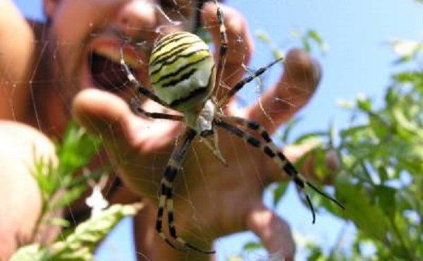 Волгоградцы пугают друг друга ядовитыми пауками