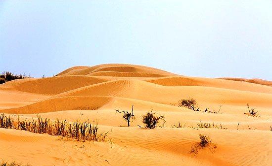 Наступающие пески поглотили 700 га фермерских земель в Астраханской области