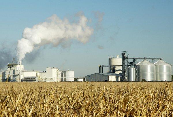 В Ростовской области откроется завод по глубокой переработке зерна