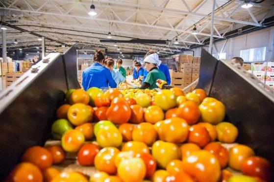 Тепличным комплексам Волгоградской области удается почти полностью обеспечивать регион своими овощами