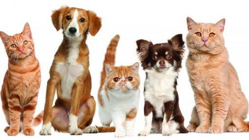 В Краснодаре открылась выставка для домашних животных